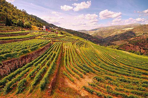 Vignes et vins du Douro