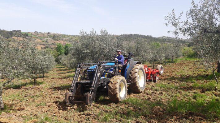 Etiquettage manuel - Dulfar - Huile d'olive Bio du Portugal - Le Comptoirdu Portugal