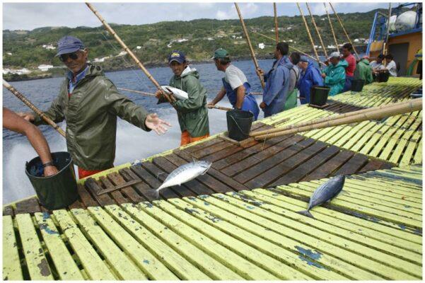 Les pêcheurs à la ligne - Santa Catarina - Conserves de thon bonito des Açores