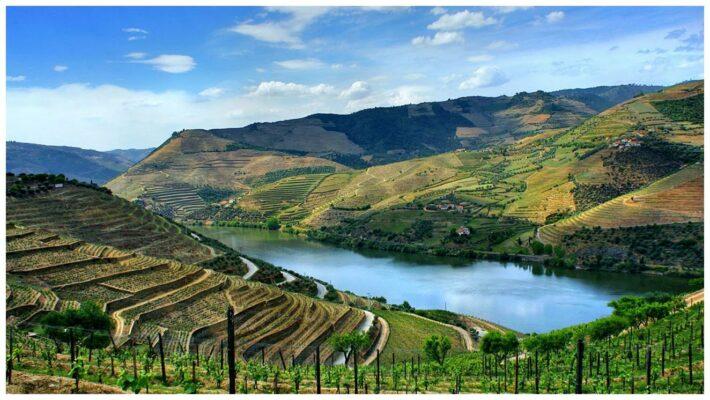Vallée du Tua et du Douro - Vins du Douro