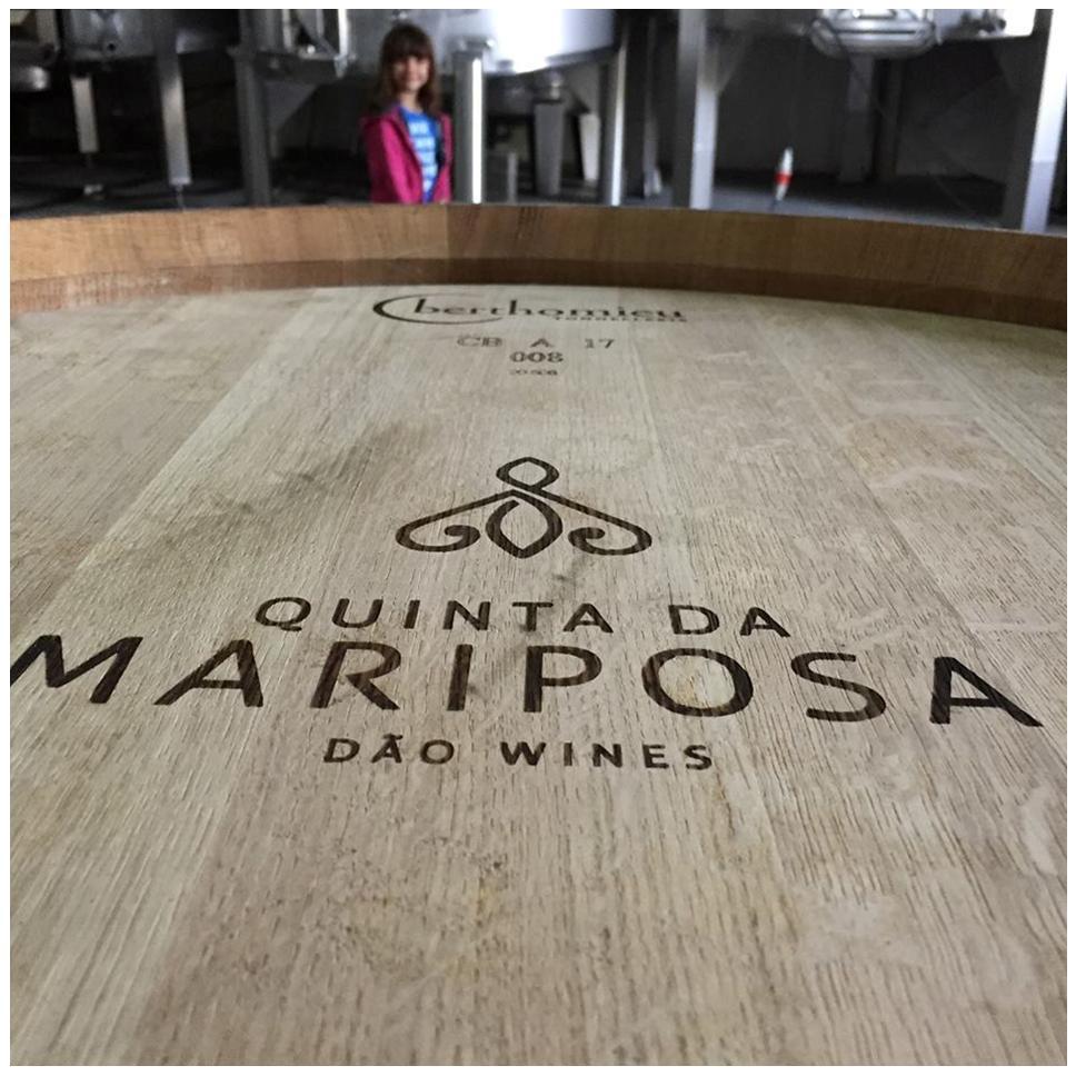Barriques - Quinta da Mariposa - Vins du Dão