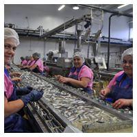 Table de tri - La Rose - Conserves de sardines du Portugal