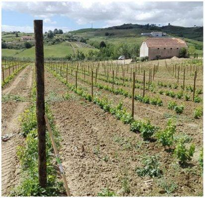 Quinta - Tiago Teles - Vins naturels bio du Portugal