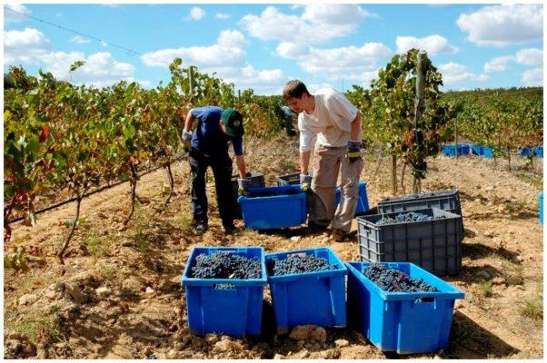 Caissettes des vendanges - Monte de Penha - Vins de l'Alentejo Portugal
