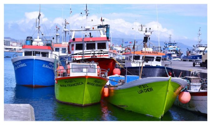 Flotte - Pescaria do Algarve - Conserves de poissons du Portugal