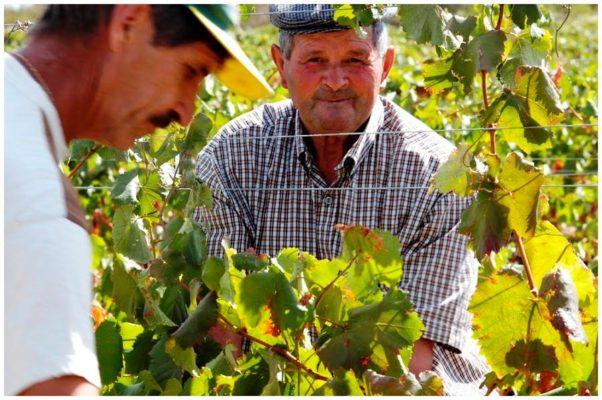 Personnel des vendanges - Monte de Penha - Vins de l'Alentejo Portugal