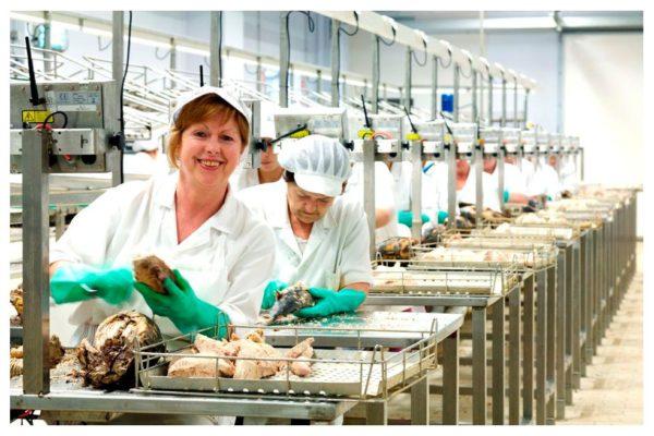 Travail du thon - Zallo - Conserves du Pays basque Espagne