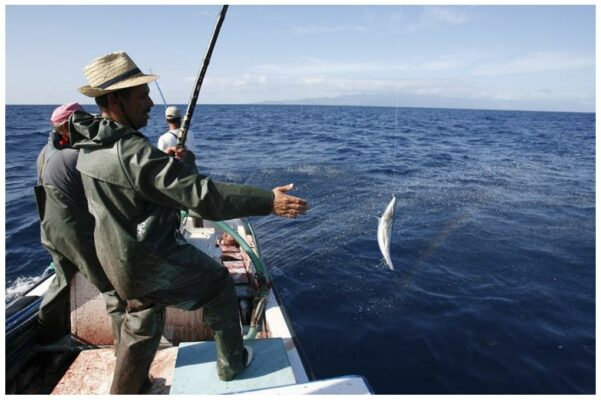 Pêcheurs à la ligne - Santa Catarina - Conserves de thon bonito des Açores