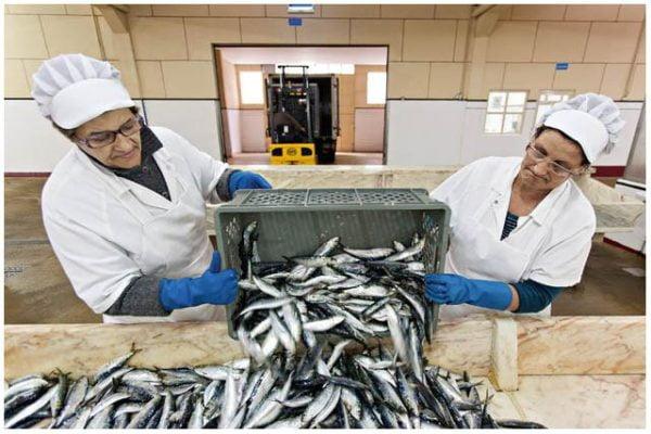 Sardines fraîches - Pinhais - Conserves de sardines du Portugal