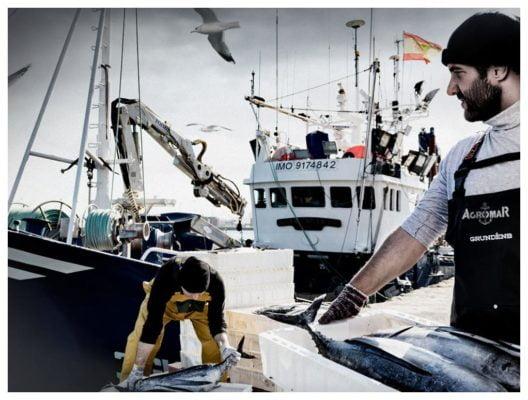 Arrivée du poisson à Gijon - Agromar - Conserves de poissons et crustacés - Asturies Espagne