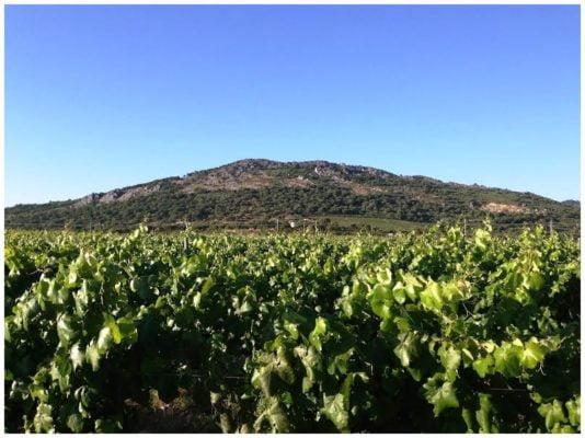 Colline de la Penha - Monte de Penha - Vins de l'Alentejo Portugal