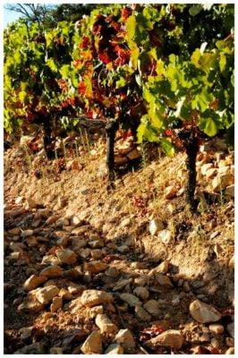 Sols argilo calcaires - Monte de Penha - Vins de l'Alentejo Portugal