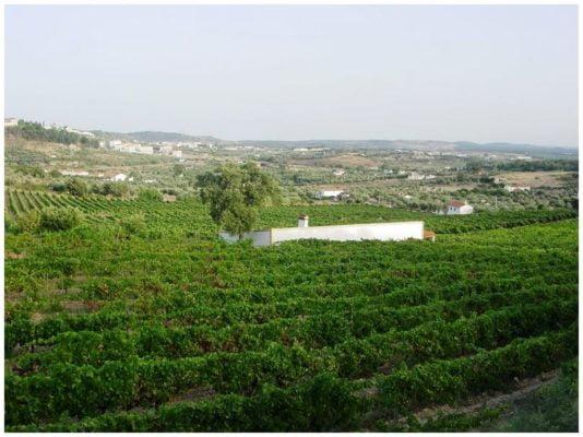 Vignes - Monte de Penha - Vins de l'Alentejo Portugal
