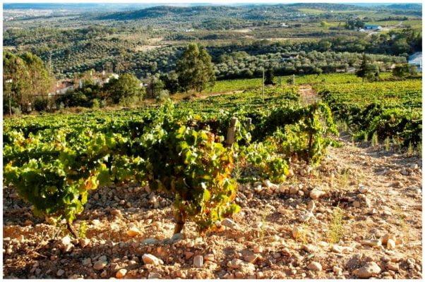 Vignes et nature des sols - Monte de Penha - Vins de l'Alentejo Portugal