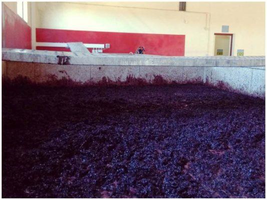 Fermentation des vins rouges - Quinta Villaroco - Vindo du Douro Portugal