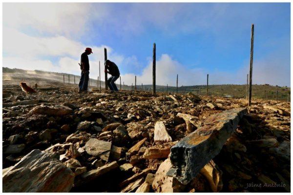 Plantation des piquets de vignes - Geraçoes xisto - Vins du Douro Portugal