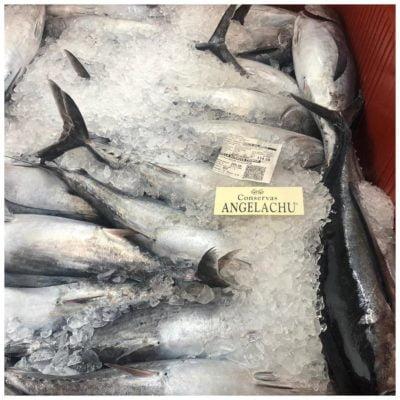 Thon bonito del norte tout frais péché- Angelachu - Conserves d'anchois de Santoña - Cantabrie