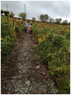 Vendanges en famille - Quinta Villaroco - Vins du Douro Portugal