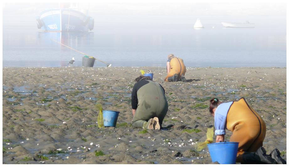 La cueillette des crustacés sur les plages galiciennes - Portomar - Conserves de poissons et crustacés - Galice - Espagne