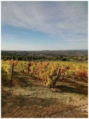 Vignes - Quinta da Caldeirinha - Vins bio du Portugal