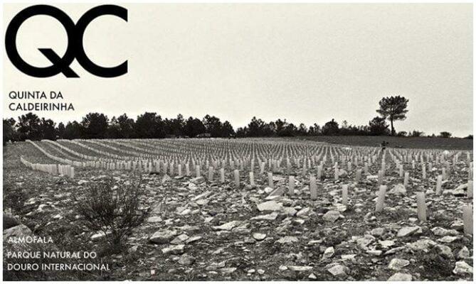 Vignoble de rocailles - Quinta da Caldeirinha - Vins bio du Portugal