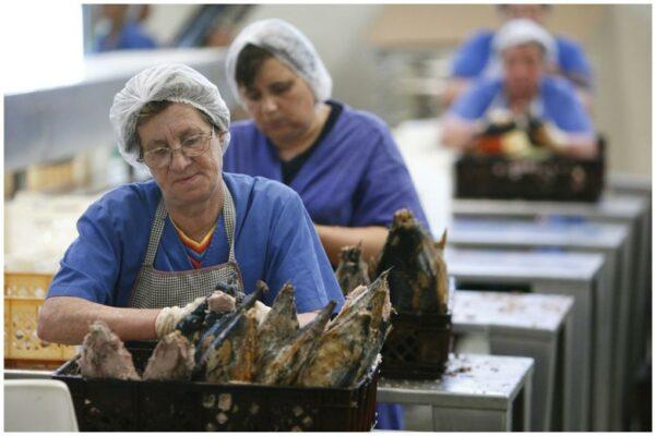 Ouvrières de la conserverie en été - Santa Catarina - Conserves de thon bonito des Açores