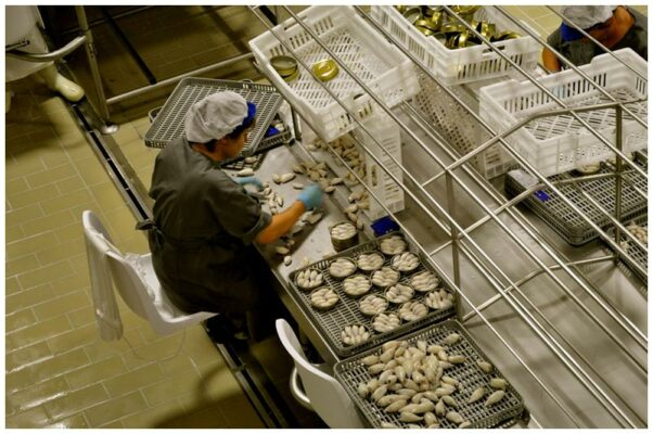 Travail à la conserverie - Real Conservera Espanola