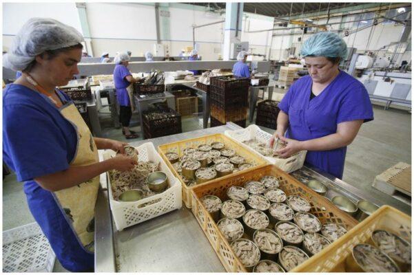 Travail du thon à la conserverie - Santa Catarina - Conserves de thon bonito des Açores