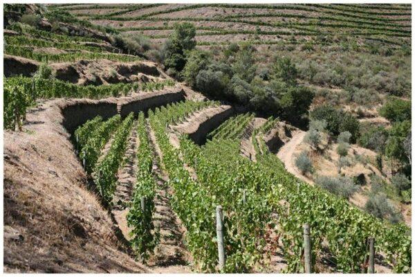 Quinta de Napoles de Niepoort - Vins du Douro