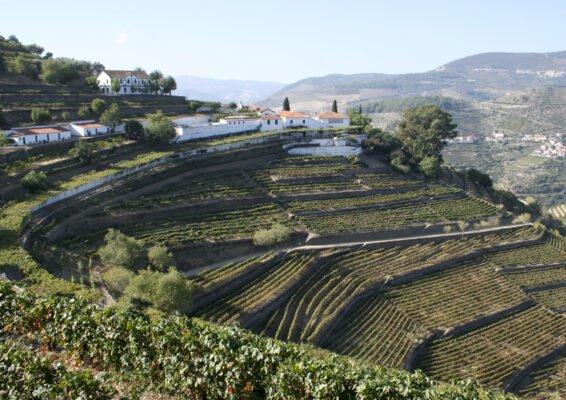 Quinta do Noval et ses terrases de vignes - Vins du Douro